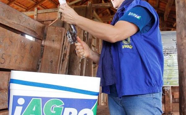Mato Grosso do Sul fica entre os três estados com melhor cobertura vacinal contra febre aftosa