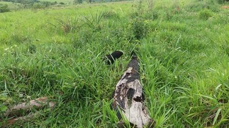 PMA autua pecuarista por desmatamento ilegal de 16 hectares de vegetação nativa de cerrado