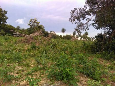 PMA de Bela Vista autua fazendeiro por desmatamento ilegal para plantio de pastagem