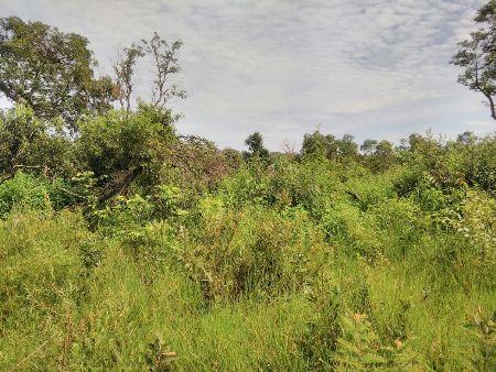PMA de Bela Vista autua fazendeiro por desmatamento ilegal verificado por imagens de satélites