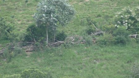 PMA de Jardim autua fazendeiro campo-grandense em R$ 17,5 por desmatamento ilegal de 58 hectares