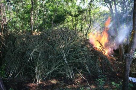 Com apoio da PF, Paraguai tira de circulação 342 toneladas de maconha na fronteira