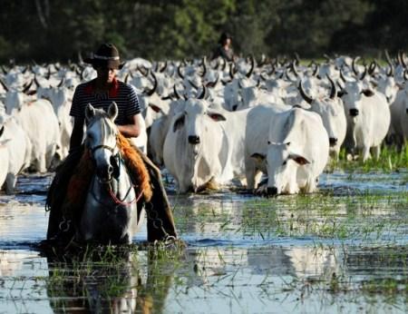 Brasil e Paraguai firmam acordo para facilitar comércio de bovinos