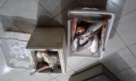 PMA autua sete pescadores em R$ 6,5 mil por transporte de pescado ilegal e apreende 78 kg de peixes