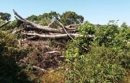 PMA de Bela Vista autua fazendeiro por desmatamento ilegal de 9 hectares de vegetação nativa