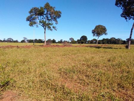 PMA de Jardim autua fazendeiro por desmatamento ilegal de 8 hectares durante a operação Cervo-do-Pantanal