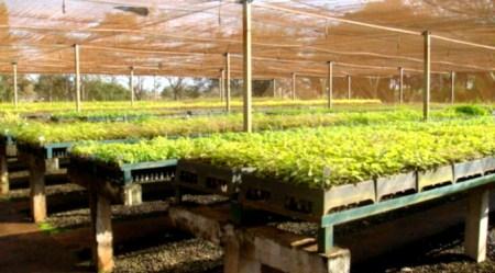 Com apoio do Governo, viveiro de São Gabriel deve receber R$ 700 mil em investimentos
