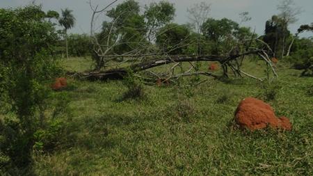 PMA de Jardim autua mais um pecuarista por desmatamento ilegal durante a operação Cervo-do-Pantanal
