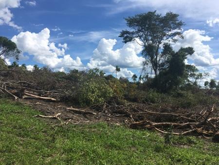 PMA autua advogado por desmatamento ilegal de 54 hectares e incêndio de vegetação nativa