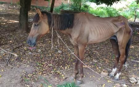 PMA autua homem de 60 anos por maus-tratos a uma égua, segundo caso idêntico em uma semana