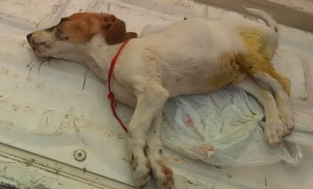 Polícia Militar Ambiental de Bela Vista autua infrator em R$ 3 mil por envenenar e matar filhote de cachorro